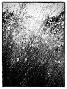 Dreamlike Framed Prints - In the sun - black and white Framed Print by Hideaki Sakurai
