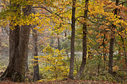 Autumn Scene Prints - In the Woods Print by Iris Greenwell
