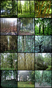 Collages Acrylic Prints - In the Woods by Roberto Alamino