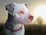 Staffordshire Bull Terrier Prints - In Thought Print by Michael Tompsett