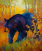 Wild Painting Framed Prints - In To Spring - Black Bear Framed Print by Marion Rose