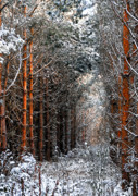 Winter Trees Mixed Media Metal Prints - In to the Light Metal Print by Svetlana Sewell