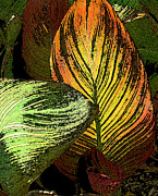Canna Lilies Photos - In Valleys of Lilies We Shall Rest by Louis Nugent
