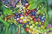 Vine Grapes Painting Posters - In Vino Veritas  Poster by June Conte  Pryor