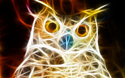 Colorful Owl Prints - Incredible Owl Portrait Print by Pamela Johnson