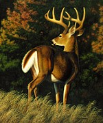 Whitetail Posters - Indecision Poster by Crista Forest