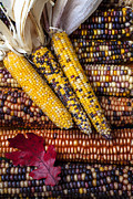 Yellows Prints - Indian corn Print by Garry Gay