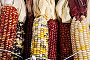 Farm Stand Photo Prints - Indian Corn Print by Jarrod Erbe