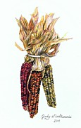 Corn Drawings - Indian corn by Judy Skaltsounis