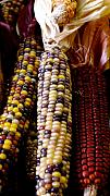 Sonja Anderson - Indian Corn