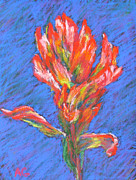 Print Pastels Originals - Indian Paintbrush by Abbie Groves