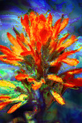 Red Flowers Art - Indian Paintbrush by Julie Lueders