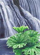 Falls Paintings - Indian Rhubarb by Catherine G McElroy