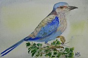 Ketki Fadnis - Indian Roller