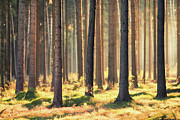 Dresden Photos - Indian Summer In Woods by Matthias Haker Photography