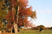 Indiana Autumn Posters - Indiana Fall in Parke County Poster by Pennie Hill