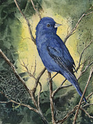 Feather Painting Acrylic Prints - Indigo Bunting Acrylic Print by Sam Sidders