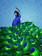 Peacock Framed Prints - Indigo Framed Print by Lisa McKinney