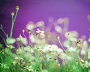 Wildflower Photos Prints - Infatuation in Purple Print by Amy Tyler