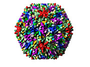 Virology Photo Prints - Infectious Bursal Disease Virus Particle Print by Laguna Design