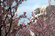 Cherry Blossoms Photo Metal Prints - Infinite Hope Metal Print by Mitch Cat