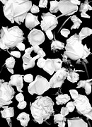 Floral Metal Prints - Infrared Flowers 1 Metal Print by Mary Rath