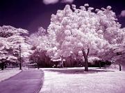 Lienzo Prints - Infrared Garden Print by Riccardo Zullian