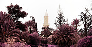 Prayer Prints - infrared Hala Sultan Tekke Print by Stylianos Kleanthous