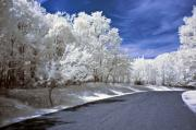Infrared Art - Infrared Road by Anthony Sacco