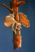 Animals Pastels Originals - Ingatestone Squirrel by Cynthia House