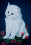 Persian Cat Paintings - Innocence by DiDi Higginbotham