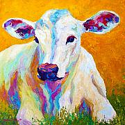 Cattle Painting Posters - Innocence Poster by Marion Rose