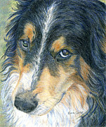 Collie Drawings Framed Prints - Innocent Eyes Framed Print by Karen Curley