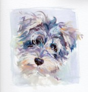 Schnauzer Puppy Framed Prints - Inquisitive Framed Print by Kimberly Santini
