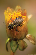 Mike Savad - Insect - Bee - Dare to BEE Different