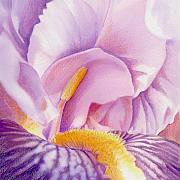 Purple Flowers Drawings - Inside Iris by Mindy Lighthipe