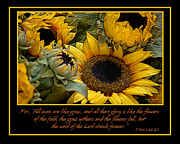 Inspirational Scripture Framed Prints - Inspirational Sunflowers Framed Print by Carolyn Marshall