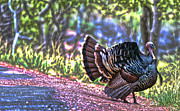 Intense Tom Turkey Display Print by Gregory Scott