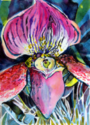 Orchids Drawings - Intensely Orchid by Mindy Newman