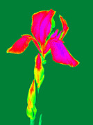 Computer Generated Flower Photos - Intensified Colors  by Kim Galluzzo Wozniak
