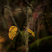 Autumn Colours Photos - Intertwined by Bonnie Bruno