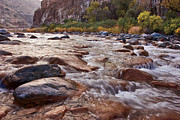 Yellow Leaves Prints - Intimate Waters on the Salt River Print by Dave Dilli