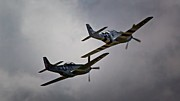 North American P-51 Mustang Framed Prints - Into the Fight Together 2011 P-51 Mustangs at Chino Air Show Framed Print by Gus McCrea