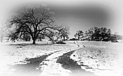Winter Road Scenes Photo Prints - Into the Foothills Print by Floyd Hopper