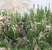 Eared Prints - Into the Grasses Print by Angie Vogel