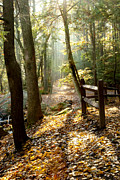 Fall Photographs Posters - Into the Light Poster by Greg Fortier