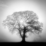 Oak Tree Photos - Into The Light by John Potter