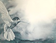 Hummingbird Originals - Into The Light by Robert Hooper