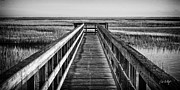 Lowcountry Photos - Into The Marsh  by Phill  Doherty