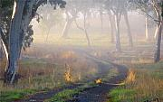 Path Photo Prints - Into the Mist Print by Mike  Dawson